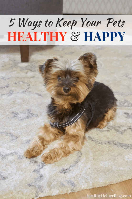 5 Ways to Keep Your Pets Healthy & Happy | Healthy Helper Simple tips for keeping your pets happy, healthy, and thriving long-term! Our animals are like our children and we want them to live as long as possible to keep us company.